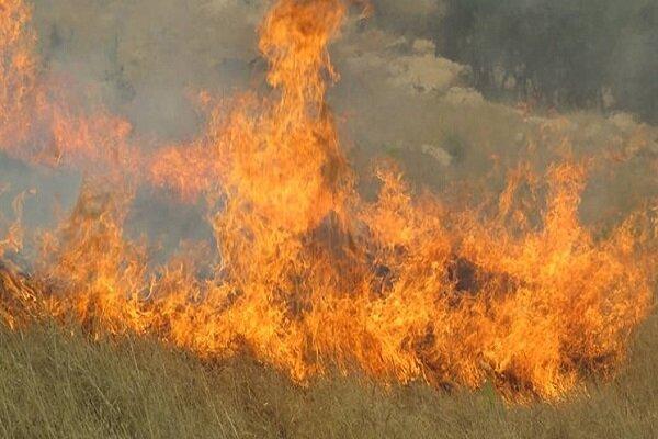 آتش در جان مراتع مسجدسلیمان